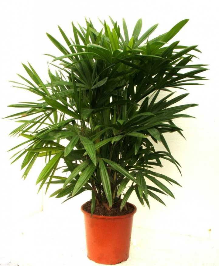 домашние растения фото картинки выросли