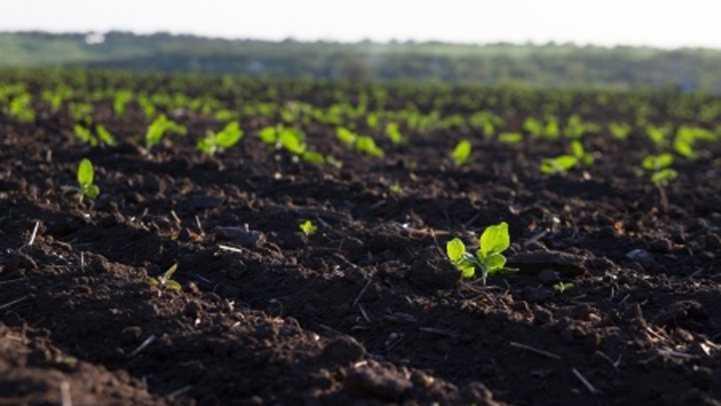 Чем можно удобрять землю на огороде
